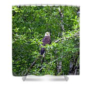 Eagle Watch Shower Curtain