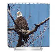 Eagle Watching Shower Curtain