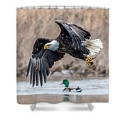 Eagle With Lunch Shower Curtain