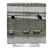 Eagles And Seals Shower Curtain