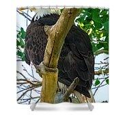 Eagles Of The Salt River Shower Curtain
