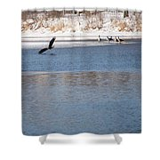 Eagles On The Fox - 1 Shower Curtain