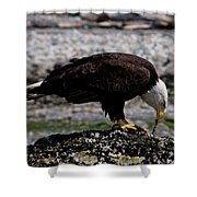 Eagle's Prize Shower Curtain