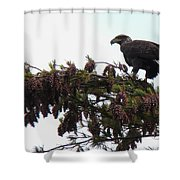 Eaglet In Pines Shower Curtain