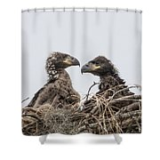 Eaglets Having A Chat Shower Curtain