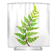 Eared Lady Fern Shower Curtain
