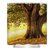 Early Autumn Oak Shower Curtain