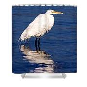 Early Bird Photograph Shower Curtain
