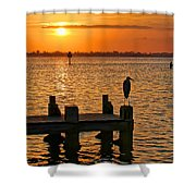 Early Birds Shower Curtain