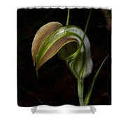 Early Cobra Orchid Shower Curtain