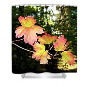 Early Days Of Autumn Shower Curtain
