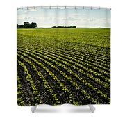 Early Growth Soybean Field Shower Curtain