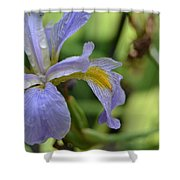 Early Iris Shower Curtain