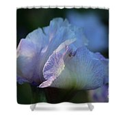 Early Iris Sunshine Shower Curtain