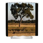 Early Morning Feed Shower Curtain