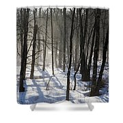 Early Morning Fog In A New Hampshire Forest Shower Curtain