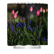 Early Morning Garden Shower Curtain