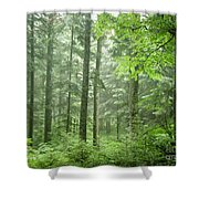 Early Morning In Swiss Forest Shower Curtain
