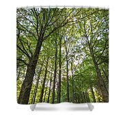 Early Morning In The Forest Shower Curtain