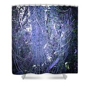 Early Morning Pearls Dew Kissed Spider Web Shower Curtain
