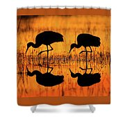 Early Morning Sandhill Cranes Shower Curtain
