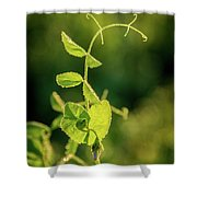 Early Morning Stretch Shower Curtain