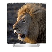 Early Morning Warning Shower Curtain