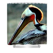Early Riser Photograph Shower Curtain