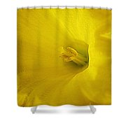 Early Spring Shower Curtain