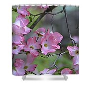 Early Spring Color Shower Curtain