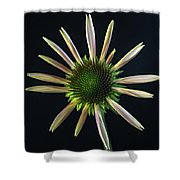 Early Stage Of Cone Flower Bloom Shower Curtain