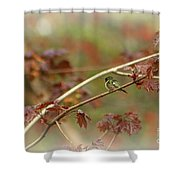 Early Summer Hummer Shower Curtain