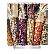 Ears Of Indian Corn Shower Curtain