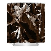 Ears To You Corn - Sepia Shower Curtain
