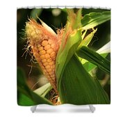 Ear's To You Corn Shower Curtain