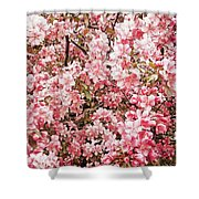 Earth Tones Apple Blossoms  Shower Curtain