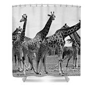 East Africa: Giraffe Shower Curtain