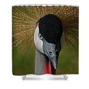 East African Crowned Crane Upclose Shower Curtain
