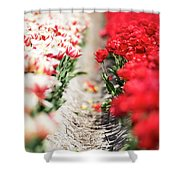 East And West A Dutch Tulip Story Shower Curtain