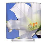 Easter Lily Back Lit By The Sun  Shower Curtain