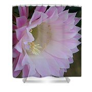 Easter Lily Cactus East 2 Shower Curtain