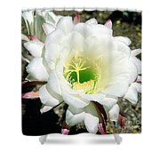 Easter Lily Cactus Flower Shower Curtain