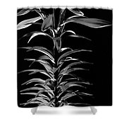 Easter Lily One Shower Curtain