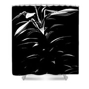 Easter Lily Two Shower Curtain