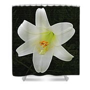 Easter Lily With Black Background Shower Curtain
