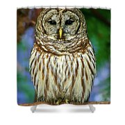 Eastern Barred Owl Shower Curtain