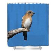 Eastern Bluebird Shower Curtain