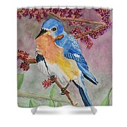 Eastern Bluebird Vertical  Shower Curtain