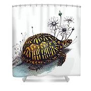 Eastern Box Turtle Shower Curtain
