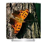 Eastern Comma Butterfly Shower Curtain